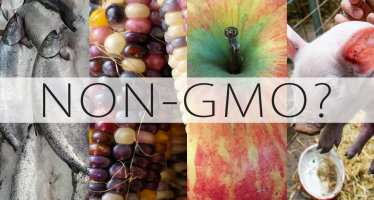 What does non gmo mean?